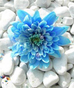 flower8_aefkfrx4