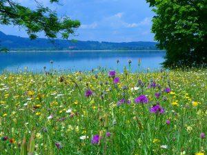 meadow-51741_640